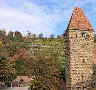 Weinberge hinter Kloster Maulbronn; Foto: Staatsanzeiger für Baden-Württemberg, Petra Schaffrodt